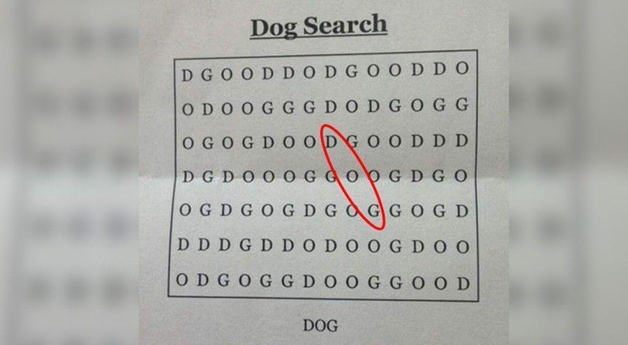 sopa de letras dog solución