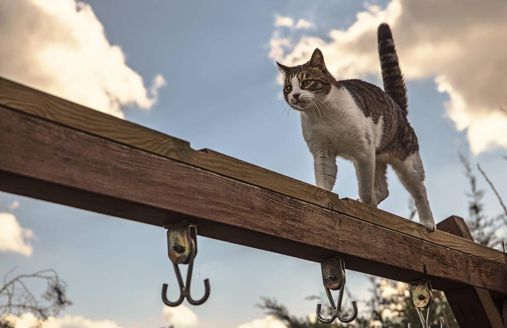 ¿Cuál es el motivo por el que los gatos siempre caen de pie?