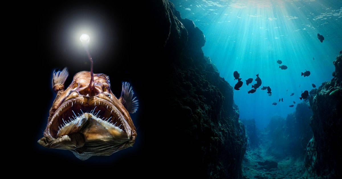 7 datos curiosos sobre los océanos que seguro no conocías