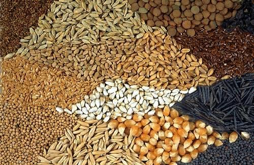 10 semillas saludables