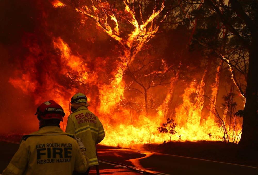 Algunas especies se beneficiarán de los incendios en Australia