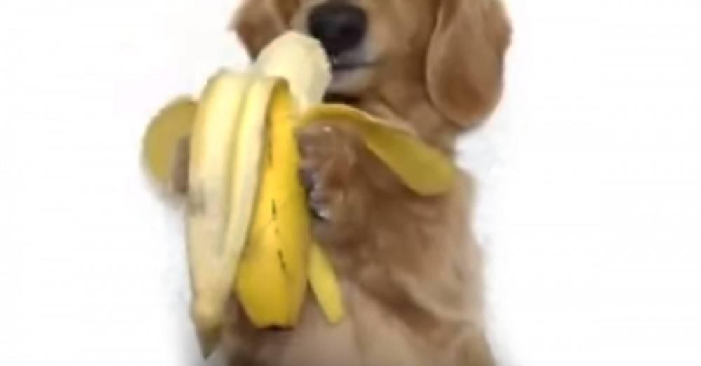 Este perrito que actúa como un mono quiere ganarse tu corazón