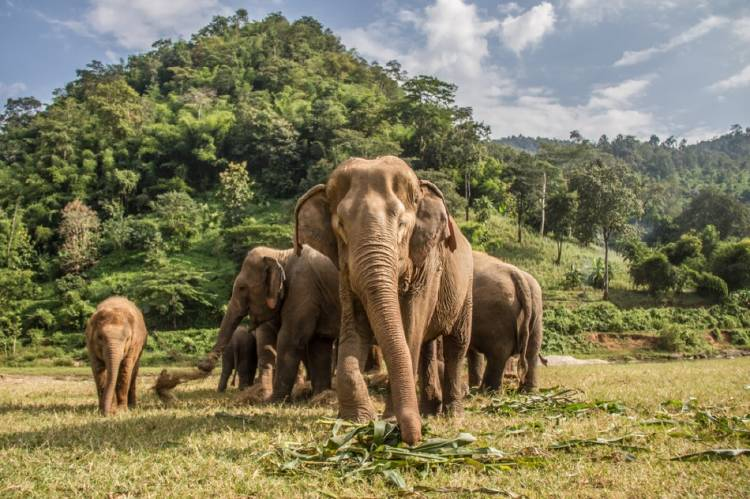10 cosas que hacen a los elefantes animales extraordinarios