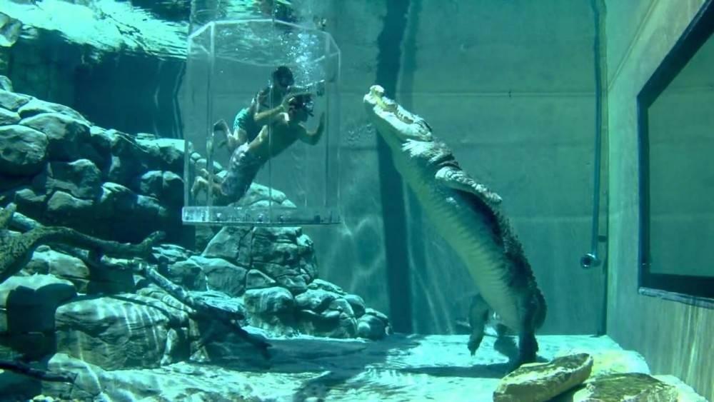 La jaula de la muerte en que turistas pagan para hacer enojar a los cocodrilos