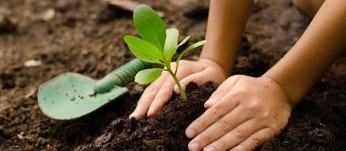 Ellos plantaron 3 mil árboles en solo 3 meses