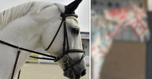 Triste y viral: indignación por una actividad escolar que consistía en pintar un caballo