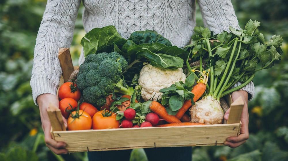 10 verduras que puedes cultivar en menos de 60 días
