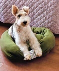 Haz una cama para tu mascota con un sweater viejo