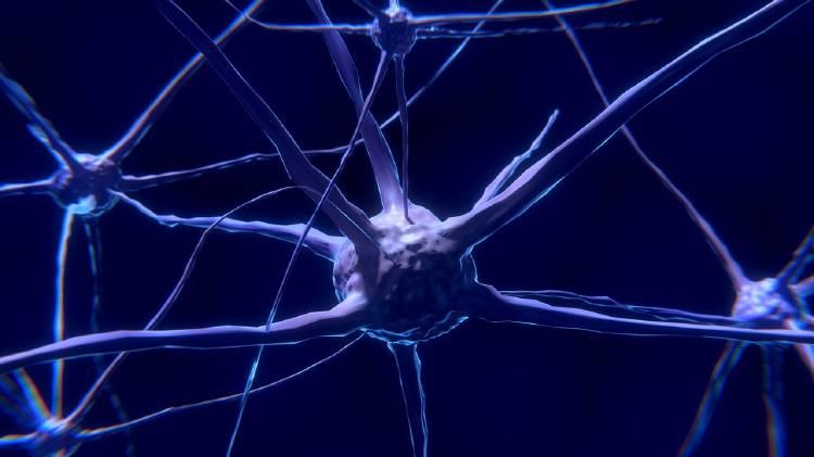 El cerebro de las mujeres es más resistente que el de los hombres