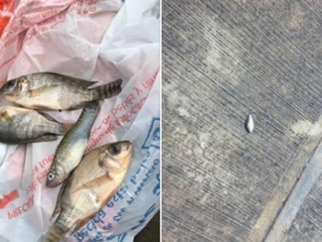 Una inexplicable lluvia de peces sorprende a México: ¿Por qué sucedió?