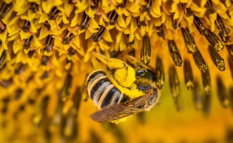 significado de las abejas