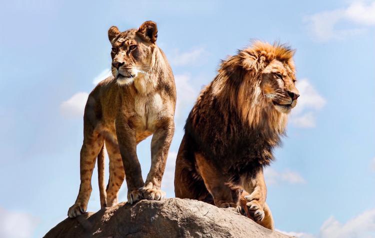 leon leona