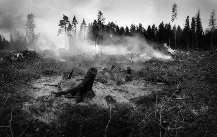 Incendios forestales: Tipos, consecuencias y prevención