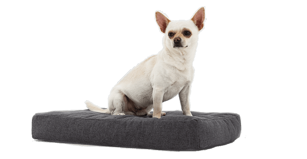 Mini colchones para mascotas