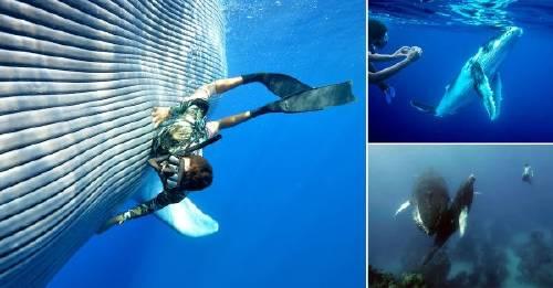 Hermosas imágenes de personas que nadaron con ballenas jorobadas