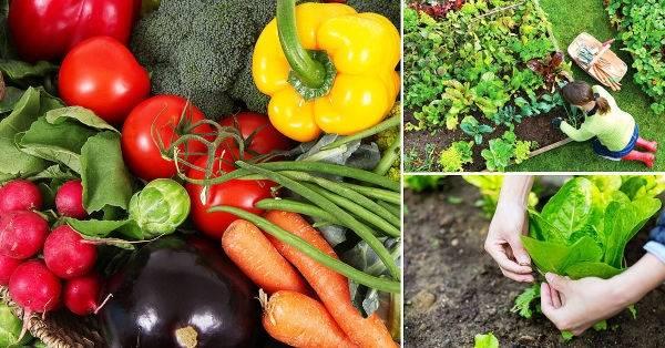 Qué sembrar en mayo: recomendaciones para ambos hemisferios