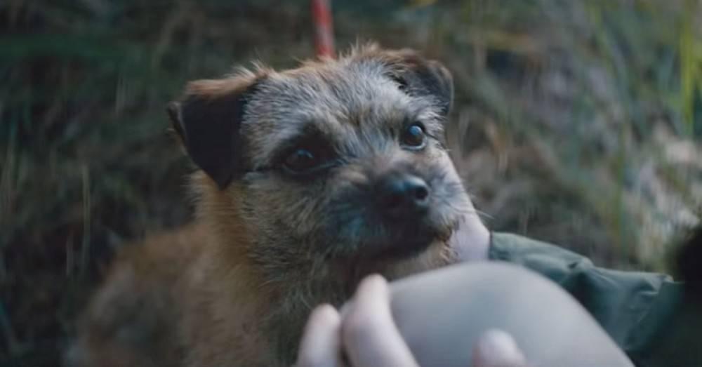 No lo abandones: una campaña sobre el maltrato a las mascotas que te hará em..