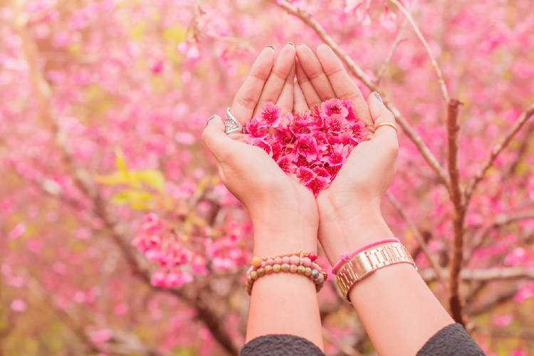 Una mujer sostiene flores de cerezo en sus manos