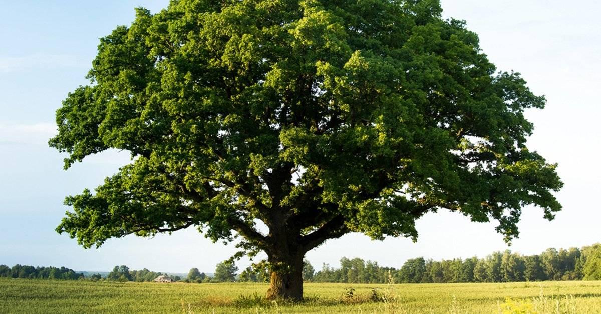 Este árbol no puede ser talado porque es dueño de si mismo