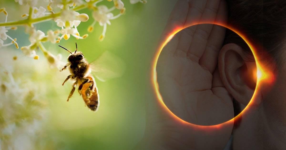 ¿Por qué las abejas dejan de zumbar durante los eclipses totales?