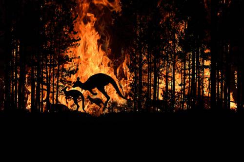 Hoy se celebra el Día Internacional para la Reducción de los Desastres Naturales