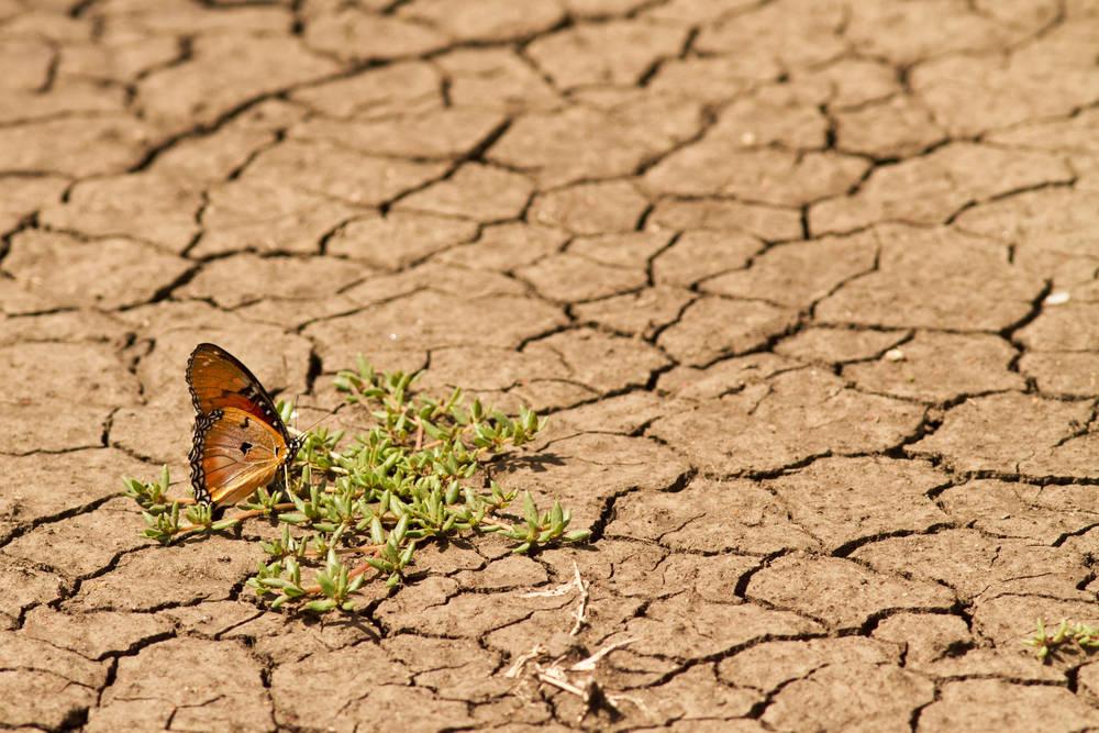 Argentina en default ambiental: se agotaron los recursos de un año en 6 meses
