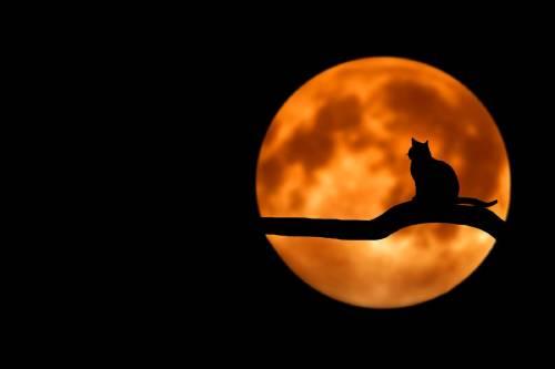 Los animales se están volviendo más nocturnos para evitar a los humanos