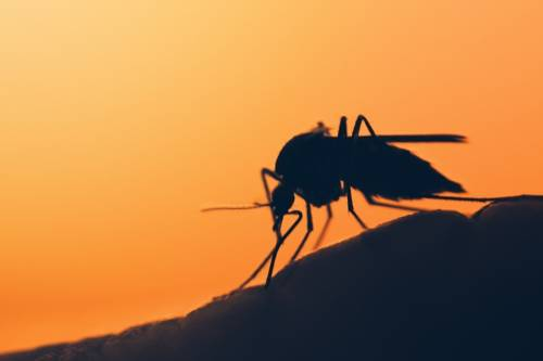 Los mosquitos pueden reconocer tu olor y evitarte si eres malo con ellos