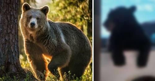 El pueblo en el que los osos son parte de la población