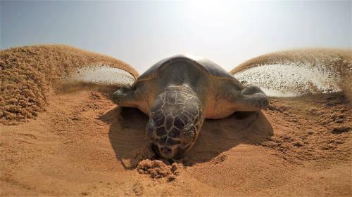 5 especies en peligro que disfrutaron de su hábitat durante la cuarentena