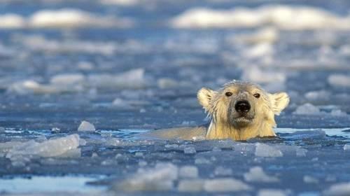 Éstas son las áreas del Ártico que deberían ser Patrimonio de la Humanidad