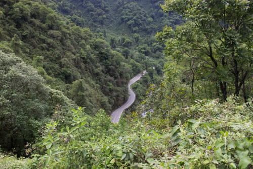 Yungas: ¿por qué es importante su reforestación?