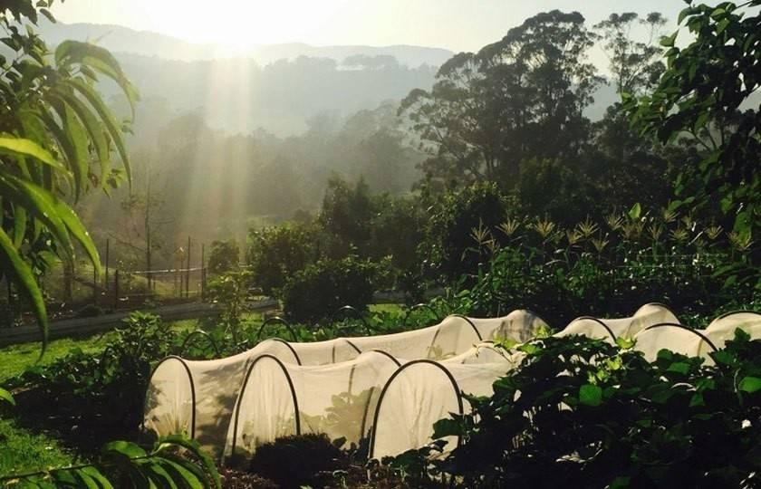 Este proyecto demuestra que se puede alimentar a 50 familias con la producció..