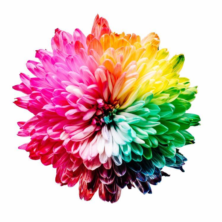 7 colores flor
