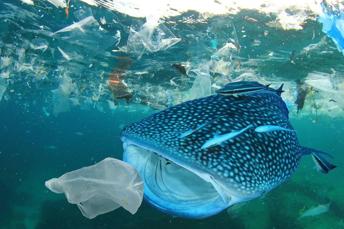 3 charlas TED con ideas innovadoras sobre el problema del plástico