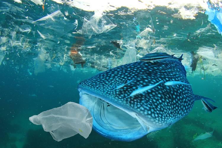 contaminacion plastico