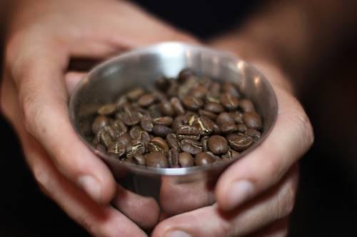 El maltrato animal detrás del café kopi luwak, el más costoso del mundo