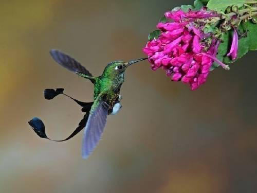 Cómo hacer un bebedero para atraer colibríes a tu jardín