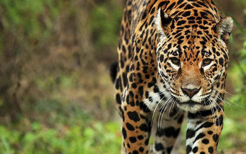 Monumentos Naturales: la fauna argentina, cuya conservación requiere protección