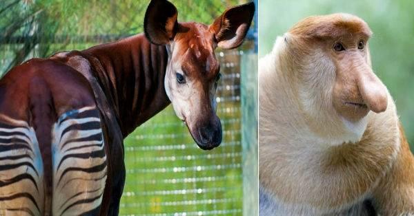 21 animales extraños que vale la pena ver