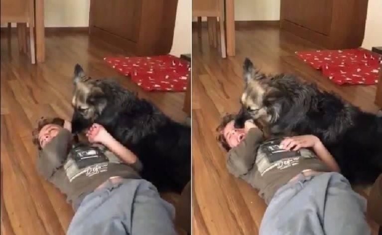 Video viral: niño con autismo estaba teniendo una crisis, pero su perrita hiz..