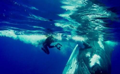 Amistad para siempre: las cámaras capturaron cómo una ballena salvó a una b..