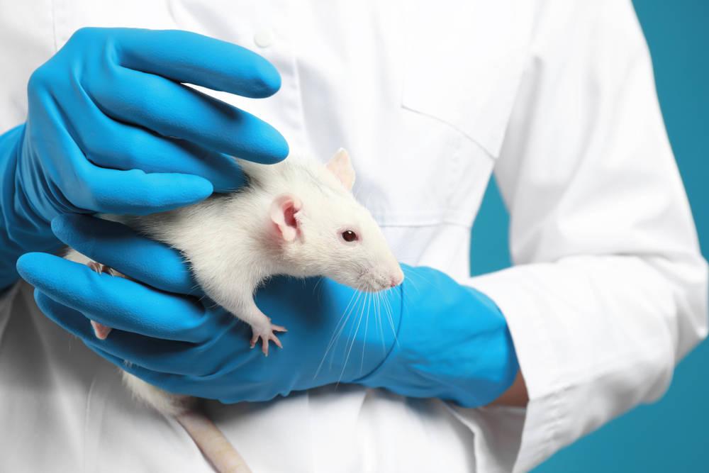 """Suspenden pruebas con animales en laboratorios de España por """"imágenes de crueldad"""""""