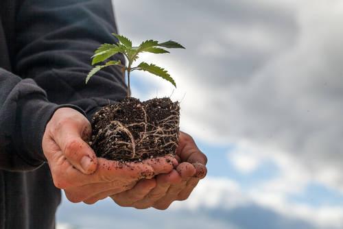 plantas plantar