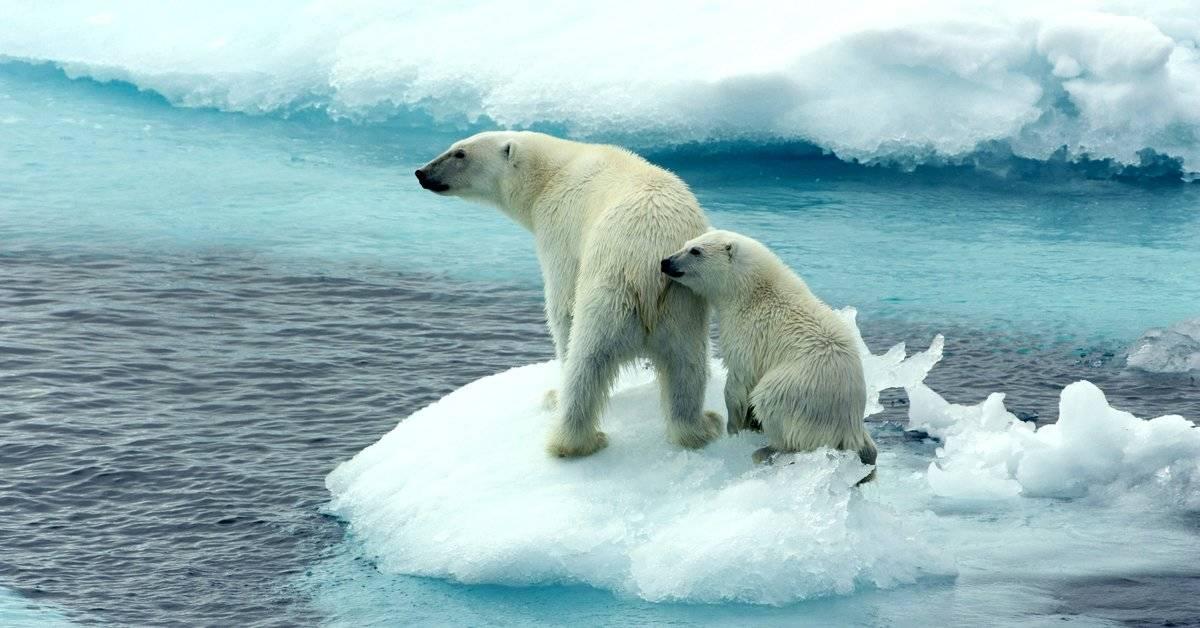 Científicos advierten que el cambio climático se volverá irreversible dentro de poco