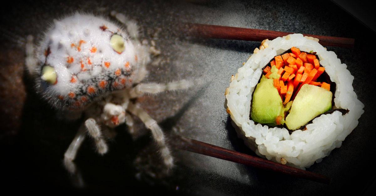 Esta araña australiana parece una porción de sushi y es alucinante