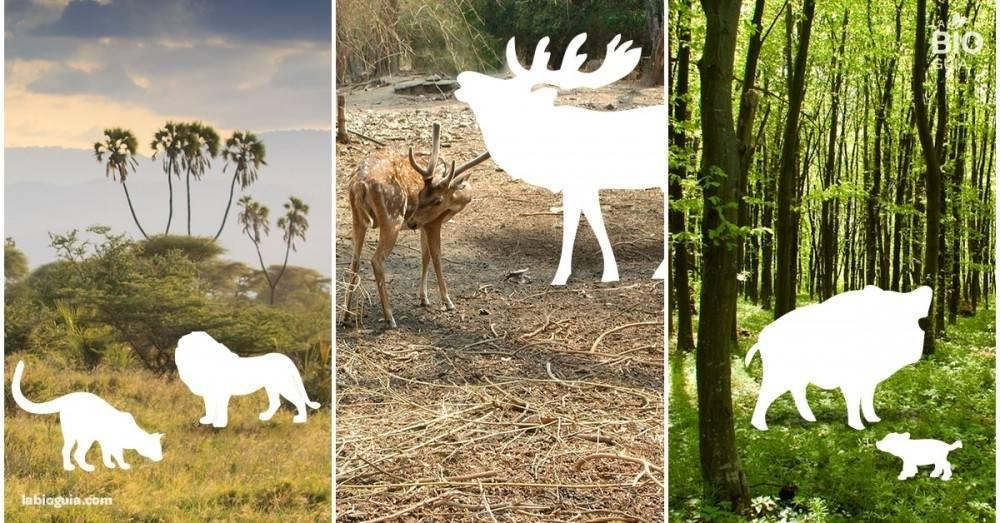 En los últimos 40 años hemos acabado con la mitad de la vida salvaje