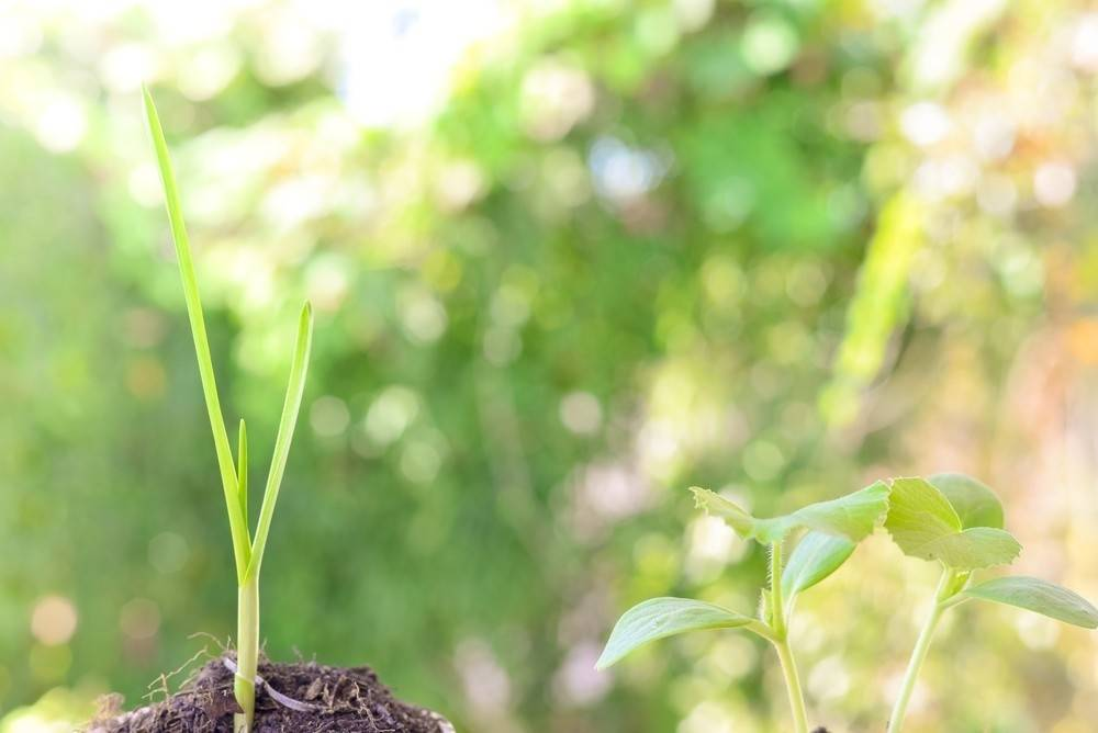 ¿Sabías que las plantas cambian su comportamiento al estar cerca de sus fami..