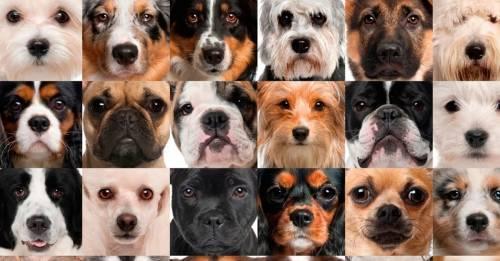Lo que estos perros no entendieron, a ti puede resultarte de gran ayuda