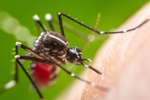 El cambio climático podría propagar el temido Chikungunya por Estados Unidos